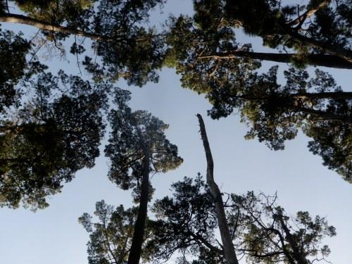 Looking up in Rip Van Winkle Park