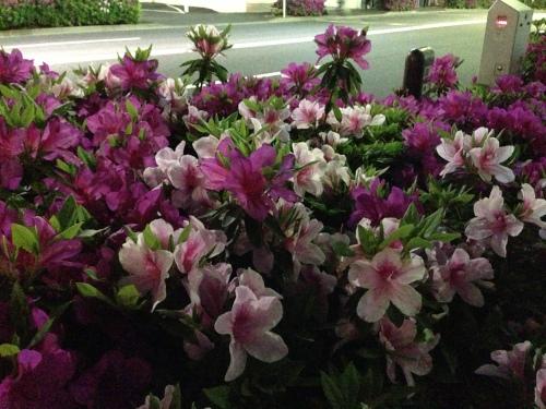 Harajuku Fleurs