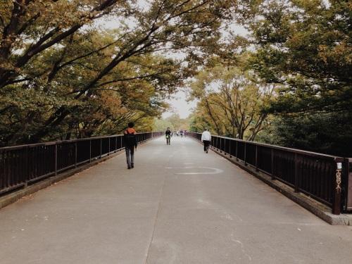 Fall Colors in Yoyogi Park