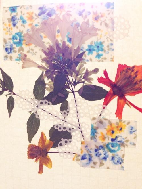 Flora, Washi, Sol