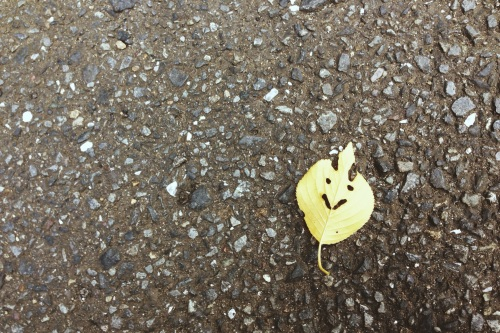 Hey there, little happy leaf
