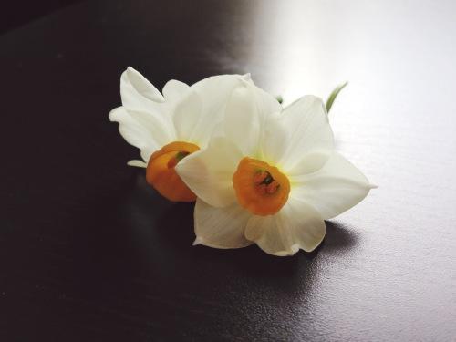 Daffodils, 2014